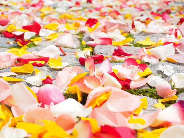 love-love-wallpaper-petals-37525